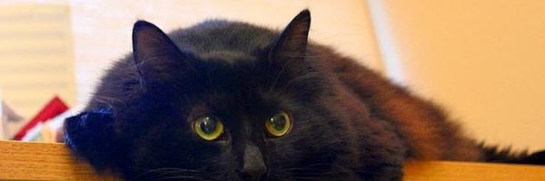 Itinéraire d'un chat noir, par @Latorfe